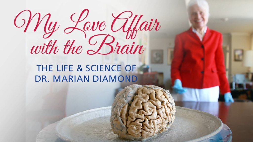My Love Affair with the Brain
