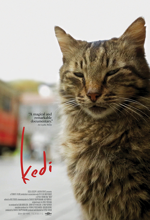 Kedi movie poster