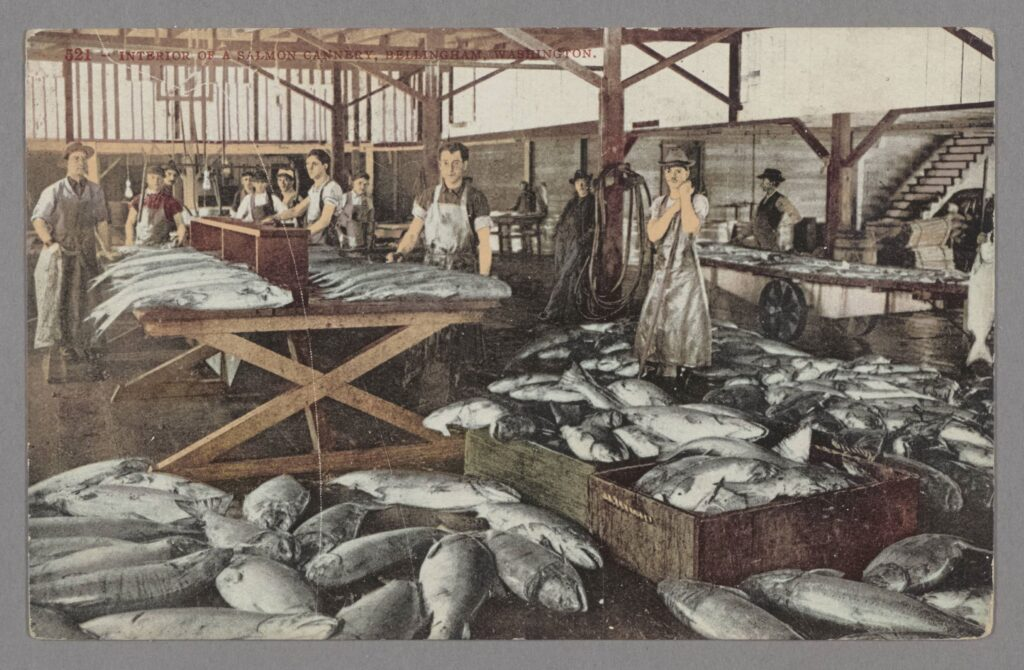 Color postcard of a factory wth workers and many dead salmon to be canned.