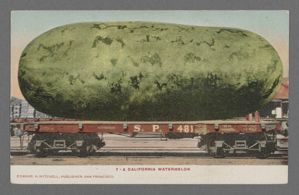 Humorous color postcard, circa 1905, of an enormous watermelon that fills and entire flatbed railroad car