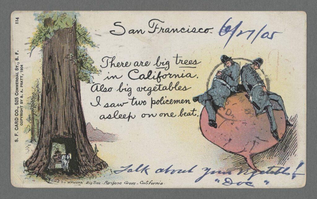 "Color cartoon postcard with a giant sequoia tree at left and a giant beet (vegetable) at right with two ""beat cops"" asleep on it, making a pun about beets and beat cops"