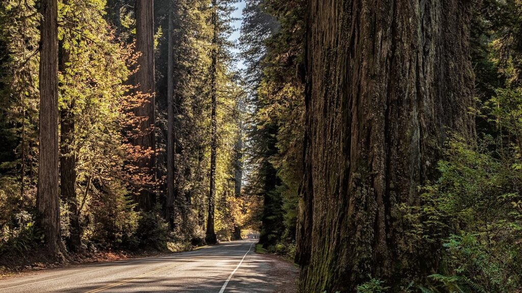 Paved road through redwood groves